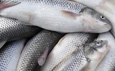 ماهی/مواد غذایی شادی آور